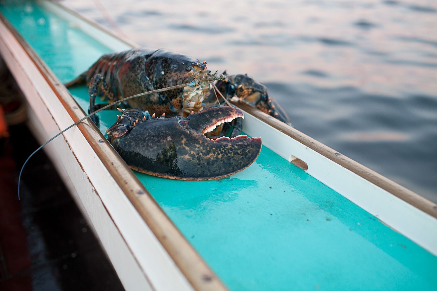 0019_lobster_fishing_fisherman_maine_new_england_photographer